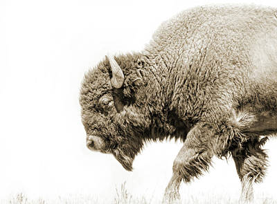 Photograph - Buffalo Walk Sepia  by Jennie Marie Schell