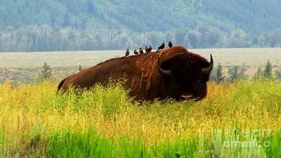 Photograph - Buffalo Wings by Janice Westerberg