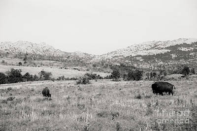 Photograph - Buffalos by Iris Greenwell