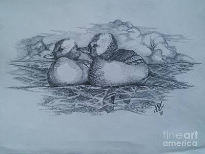 Old Pals Drawing - Bufflehead Buddies by Peter C Lavin