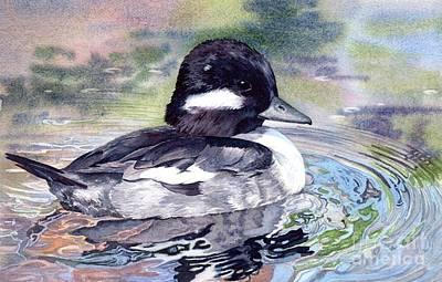 Bufflehead Duck Art Print by Lorraine Watry