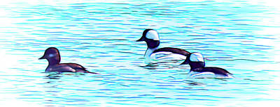 Photograph - Buffleheads by Leslie Montgomery