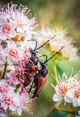 Photograph - Bug Couple by Lilia D