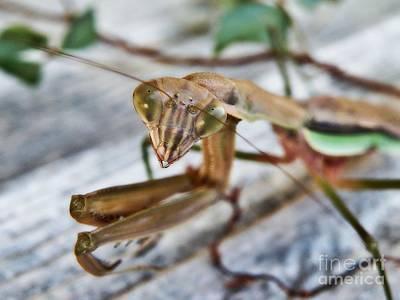 Photograph - Bug Eyed  by Christy Ricafrente