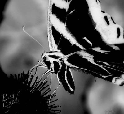 Photograph - Bug Eyed by Edward Smith