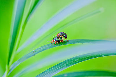 Making Photograph - Bug Mating by Az Jackson