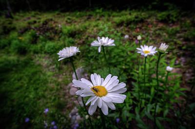 Digital Art - Bug On Flower by Patrick Groleau