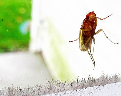 Photograph - Bug On Window by Amanda Balough