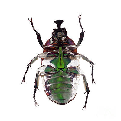 Photograph - Bug Series 005 by Clayton Bastiani
