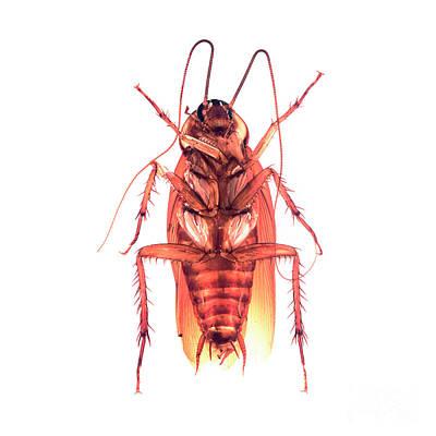 Photograph - Bug Series 007 by Clayton Bastiani