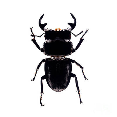 Photograph - Bug Series 010 by Clayton Bastiani