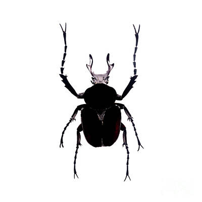 Photograph - Bug Series 012 by Clayton Bastiani