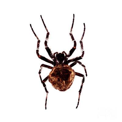 Photograph - Bug Series 016 by Clayton Bastiani