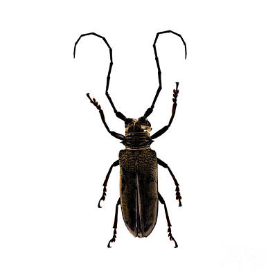 Photograph - Bug Series 017 by Clayton Bastiani