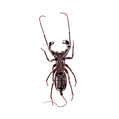 Photograph - Bug Series 019 by Clayton Bastiani