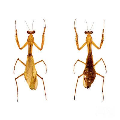 Photograph - Bug Series 028 by Clayton Bastiani