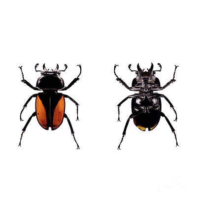 Photograph - Bug Series 029 by Clayton Bastiani