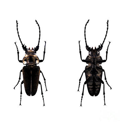 Photograph - Bug Series 030 by Clayton Bastiani