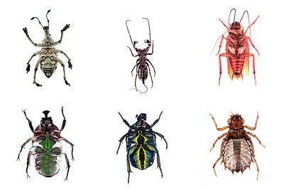 Photograph - Bug Series Underbelly Set by Clayton Bastiani