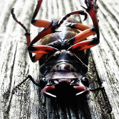 Photograph - Bugged Out 3 by Robert Knight