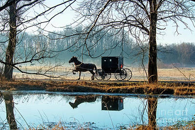 Photograph - Buggy And Pond by David Arment
