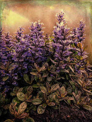 Photograph - Bugleweed Chocolate Chip by Leslie Montgomery