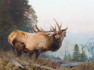 Bugling Painting - Bugling Elk  by Celestial Images