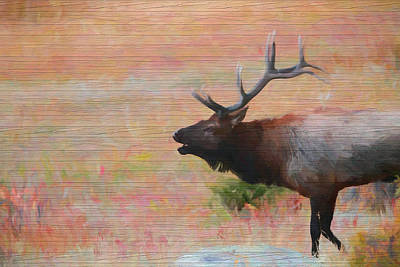 Mixed Media - Bugling Elk Wood Panel by Dan Sproul