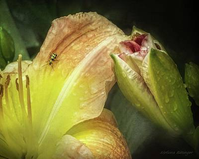 Cucumber Beetle Photograph - Bugs And Blooms, Cucumber Beetle Daylily by Melissa Bittinger