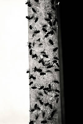 Photograph - Bugs  by Jerry Cordeiro