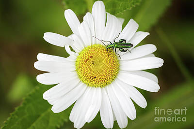 Photograph - Bugs Life by Paul Farnfield