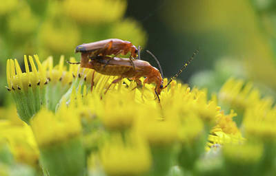 Photograph - Bugs Love  by Cliff Norton