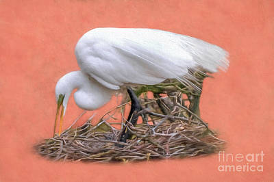 Photograph - Building A Nest by Marion Johnson