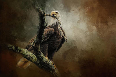 Photograph - Building Her House Bald Eagle Art by Jai Johnson