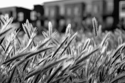 Uc Davis Photograph - Buildings Are Growing Behind The Grass by Alessandra RC