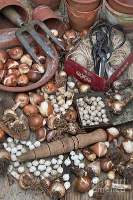 Spring Bulbs Photograph - Bulbs by Tim Gainey