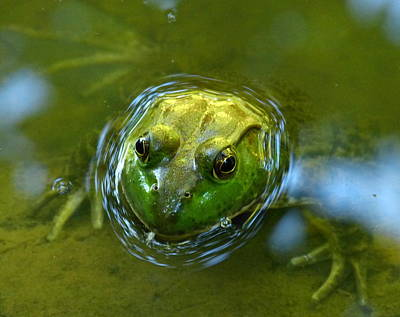 Wall Art - Photograph - Bulfrog by Donna Papps