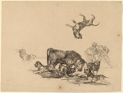 Buy Dog Art Drawing - Bull Attacked By Dogs by Francisco Goya