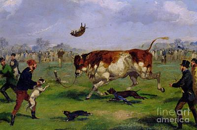 Cattle Dog Painting - Bull Baiting by Samuel Henry Alken