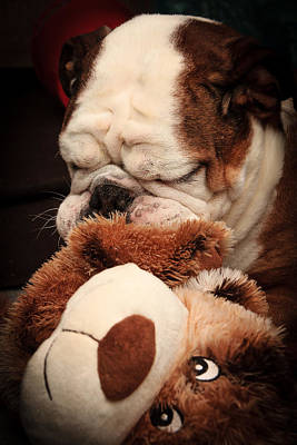 Photograph - Bull Dog Vs. Stuffed Dog by Joni Eskridge
