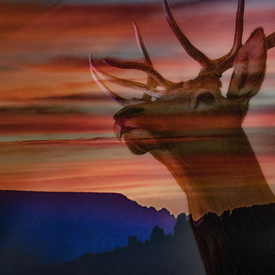 Photograph - Bull Elk And Sedona Sunset by Ron White