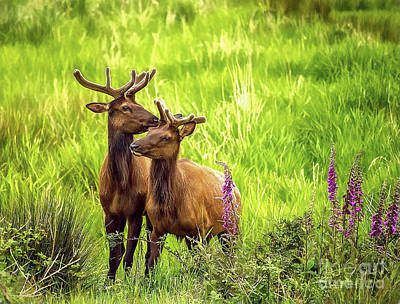 Photograph - Bull Elk by Billie-Jo Miller