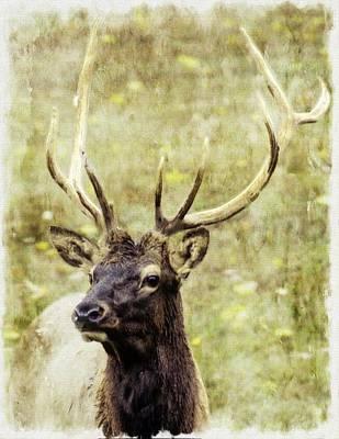 Digital Art - Bull Elk Closeup by Rusty R Smith