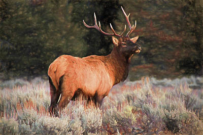 Photograph - Bull Elk  by Donna Kennedy
