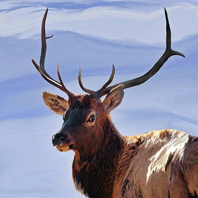 Painting - Bull Elk Freehand 1 by Ernie Echols