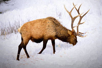 Photograph - Bull Elk In Winter by Greg Norrell