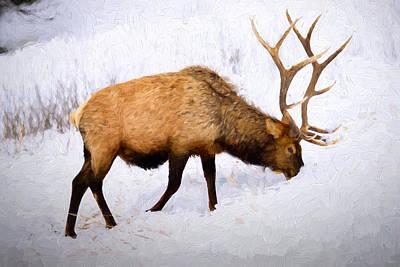 Western Art - Bull Elk in Winter by Greg Norrell