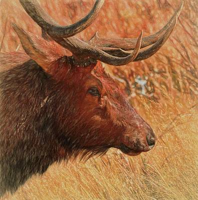 Painting - Bull Elk Portrait by Dan Sproul