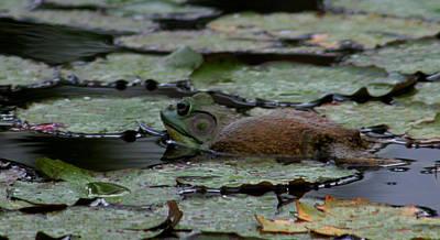 Photograph - Bull Frog by Pamela Walton