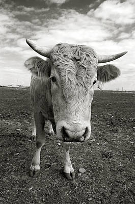 Bull Art Print by Jimmy Bruch